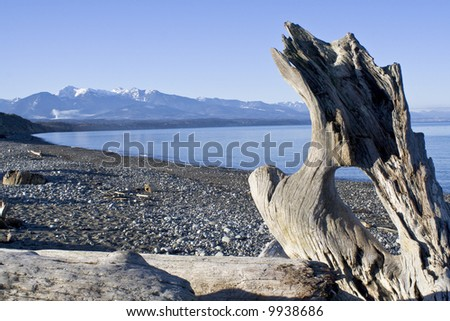 wild beach landscape with driftwood in Washington - stock photo