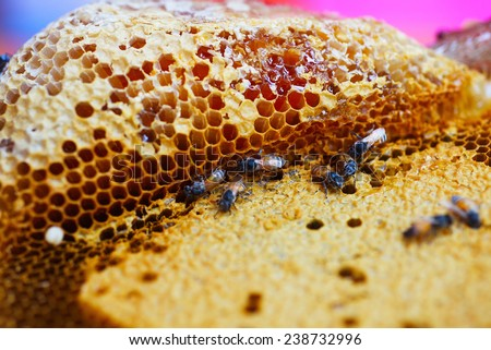 Wild bees fill the honey in cell - stock photo