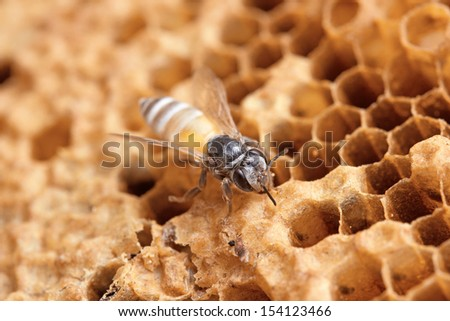 wild bees macro shot  in honeycomb