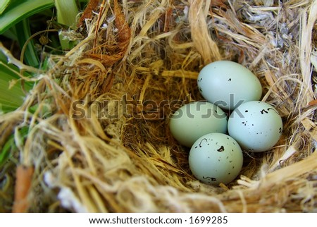 Wild Bird eggs in potted plant - stock photo