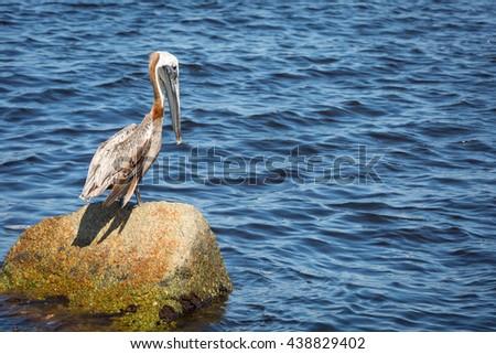 Wild birds on the Florida coast of the gulf of mexico - stock photo