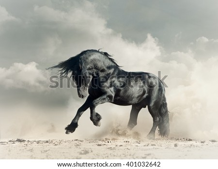 Wild black stallion in desert running
