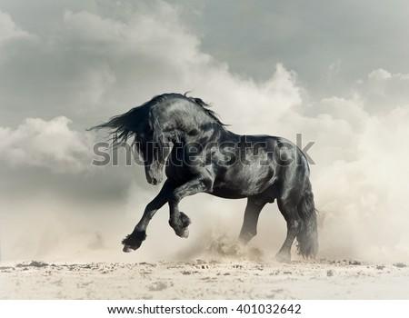 Wild black stallion in desert running - stock photo