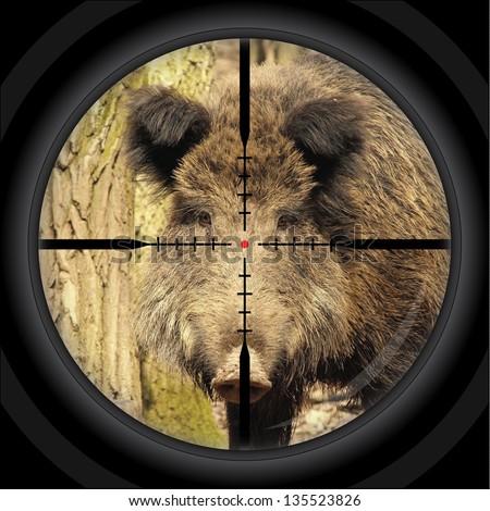 wild boar hunt / shooting / cross-hair - stock photo