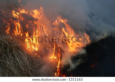 wild bushes on fire raging out of control