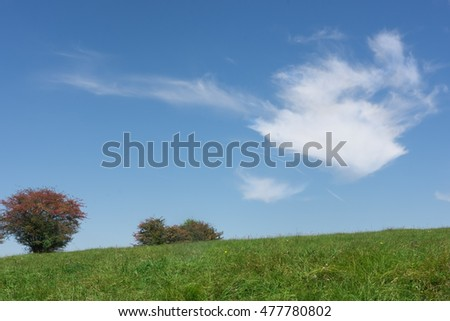 Wild bushes with red berries under blue sky