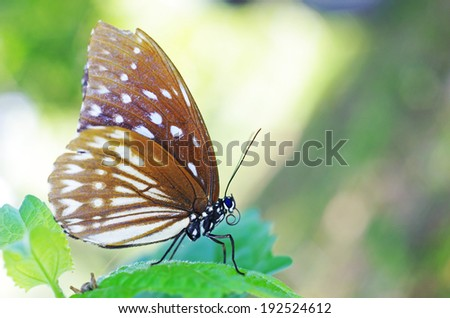 wild butterfly is standing on the tree leaf - stock photo