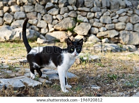Wild cat in black and white in natural blur dirty background, wild cat in the mountains, little cat in a shadow outside - stock photo