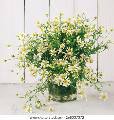 Wild chamomiles bouquet on white wooden background. - stock photo