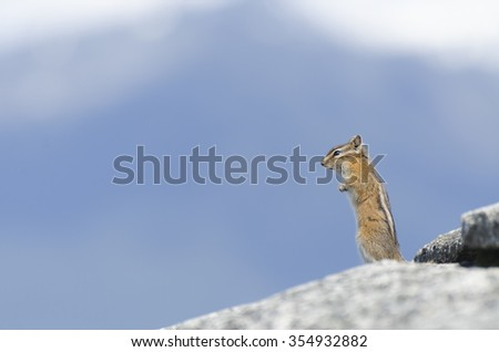 Wild chipmunk stands upright on a rock  - stock photo