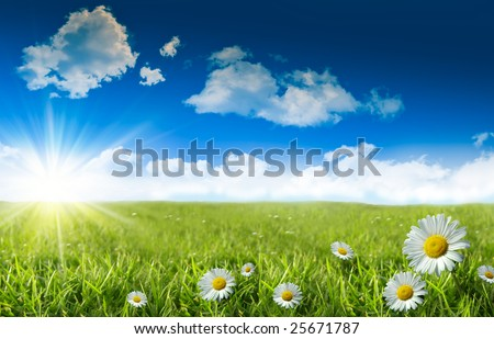 Wild daisies in the grass with summer blue sky - stock photo