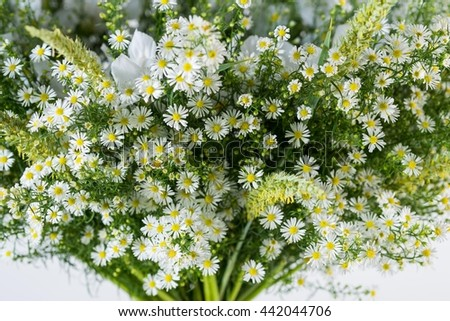 wild daisy, bouquet isolated, green background, white