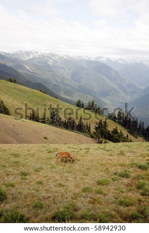 Wild deer in the alpine meadow - stock photo