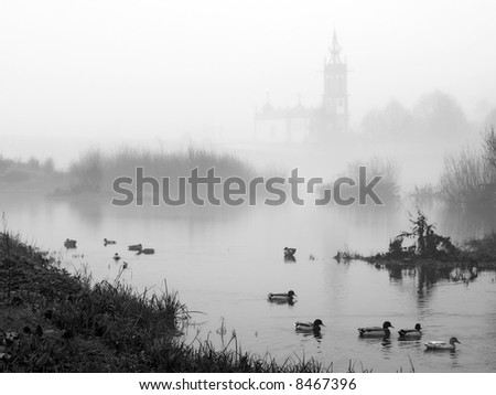 Wild duck of river Lima near Ponte de Lima in Portugal in a winter foggy day - stock photo