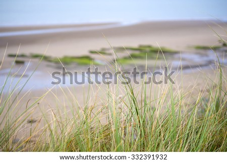 wild dune grass in beal beach county kerry on the wild atlantic way - stock photo