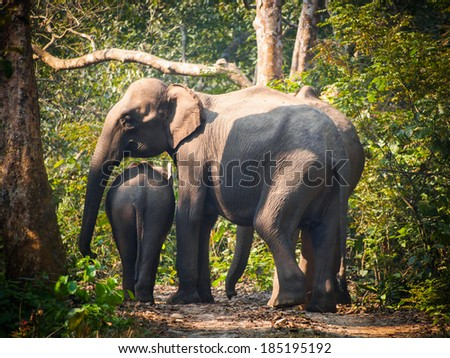 Wild elephants (from herd of about 17) in Bardia National Park, Nepal - stock photo