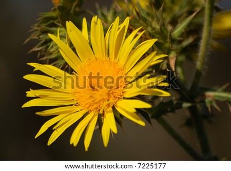 Wild flower 2 - stock photo