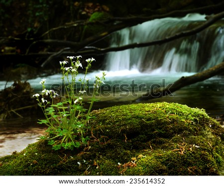 wild flower by the brook on a mossy stone   - stock photo