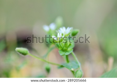 Wild flower close-up - stock photo