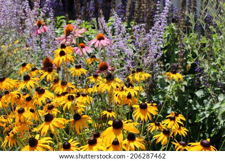 Wild flower garden - stock photo