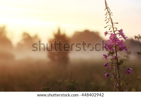 wild flower in fog on sunset