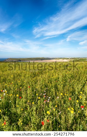 Wild flower meadow at Pentire Head near Newquay in Cornwall - stock photo
