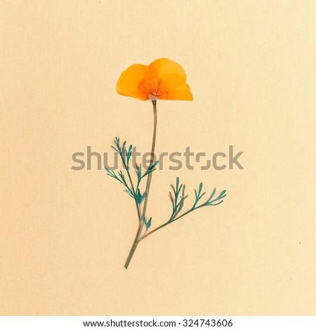 Wild Flower on white background. Minimal style - stock photo