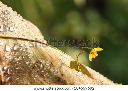 Wild flower with water drops, Concept of business break through - stock photo