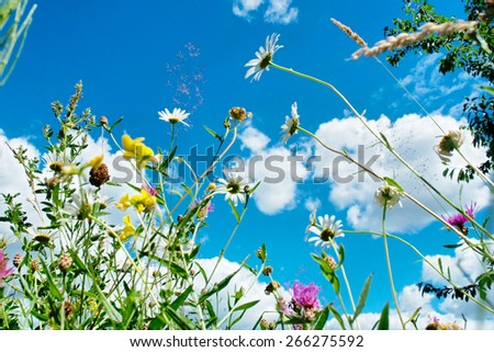 Wild flowers against blue sky - stock photo