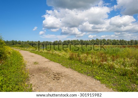 Wild flowers along the shore of a lake in summer  - stock photo