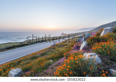 wild flowers and California coastline in Big Sur - stock photo
