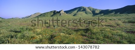 Wild flowers and green rolling hills in Carrizo Plain National Monument, San Luis Obispo County, California - stock photo