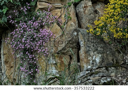 wild flowers climbing on a rock