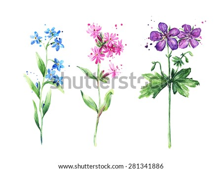 Wild flowers collection, watercolor - stock photo