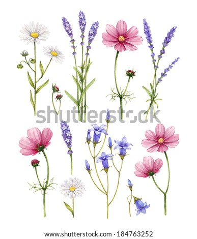 Wild flowers collection. Watercolor illustrations - stock photo