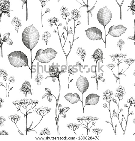 Wild flowers drawing. Seamless pattern - stock photo