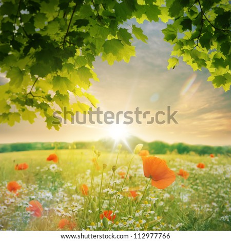 Wild flowers field at sunset - stock photo