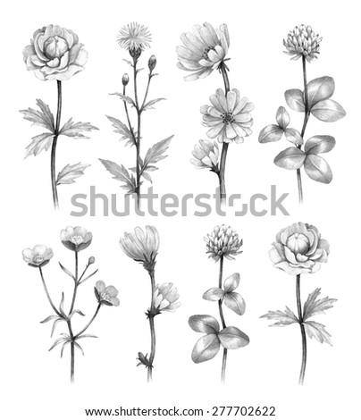 Wild flowers illustrations - stock photo