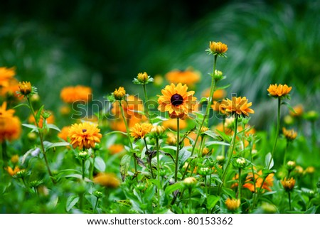Wild Flowers . Many yellow wild flowers in a field - stock photo