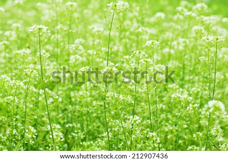 Wild flowers on green meadow. Floral background. Macro image  - stock photo