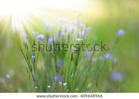Wild flowers with sun flare on  - stock photo
