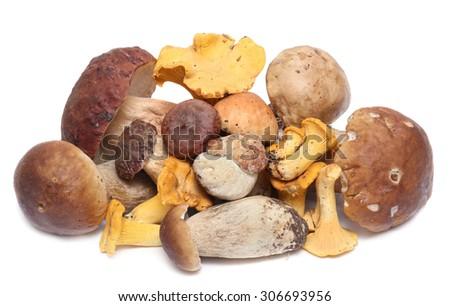 Wild Foraged Mushroom selection isolated on white background, with shadow. Boletus Edulis mushrooms over white background  - stock photo
