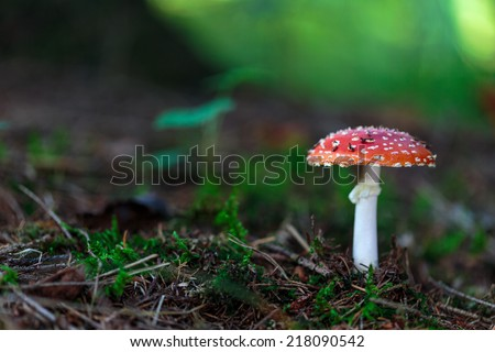 wild forrest fly agaric in the woods of Bavaria in Germany in fall. Picture of the toadstool with lovely bokeh was taken on a warm September day. - stock photo