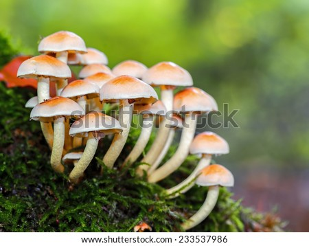wild forrest mushroom in the woods of Bavaria in Germany in fall. Picture of the fungi with lovely bokeh was taken on a warm September day. - stock photo