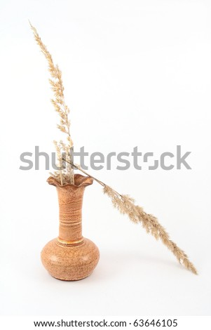 Wild grass in the vase on white background - stock photo