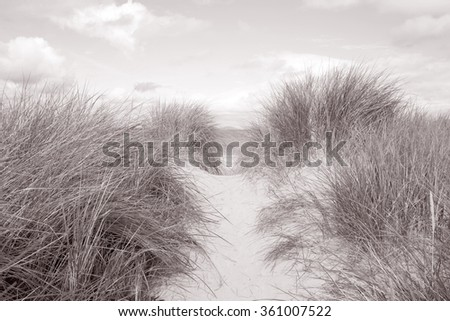 Wild Grass on Glassillaun Beach, Killary Fjord, Connemara National Park, County Galway, Ireland in Black and White Sepia Tone