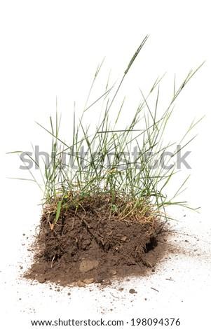 Wild grass with soil - stock photo