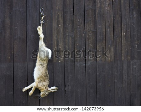 wild hare after hunting - stock photo