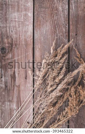 wild herbs on a wooden background
