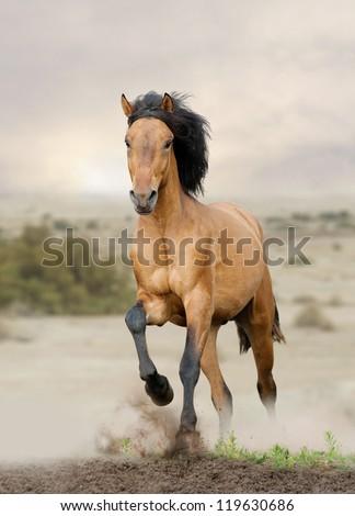 wild horse in prairies - stock photo